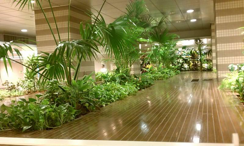 Tropical Underground