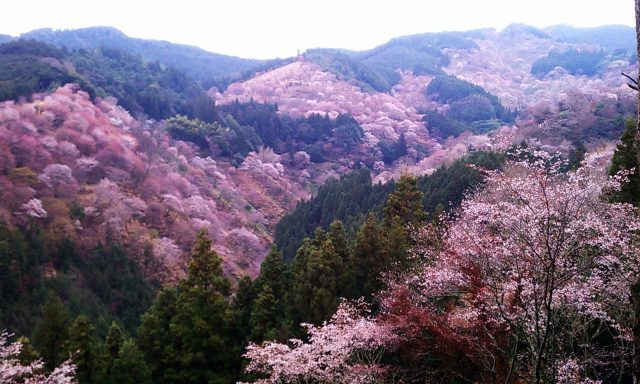 吉野山〜奈良公園