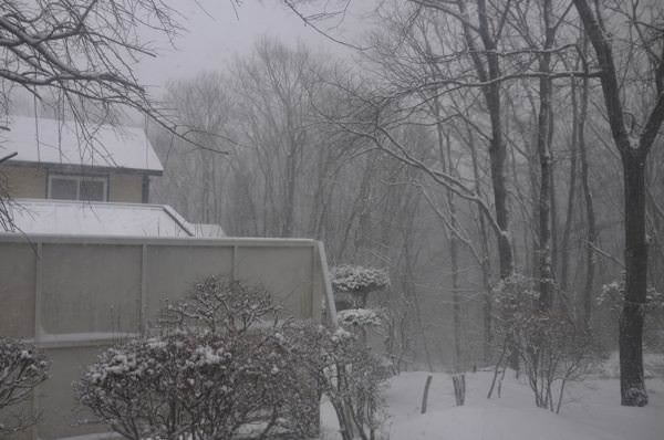 またまた雪