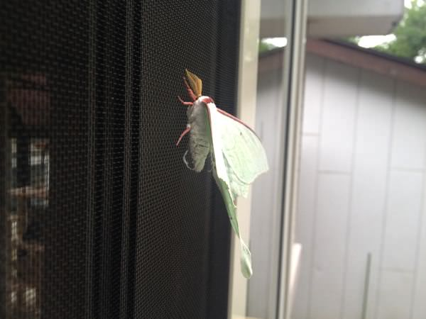 Butterfly or moth