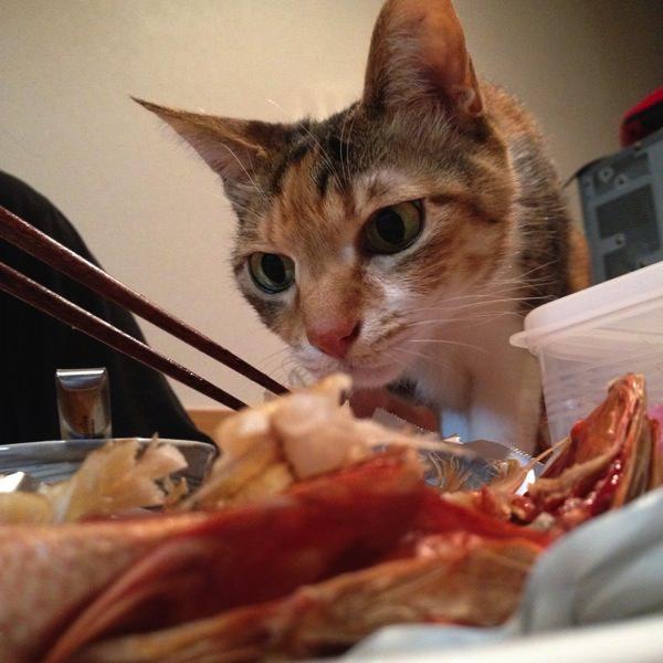食卓に魚が並んだときの風景