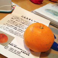 ハルミオレンジ