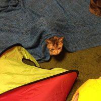 Under the blanket