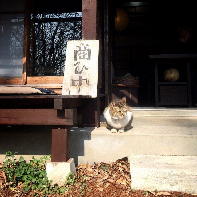 夢屋の看板猫