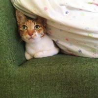 猫の虫対策