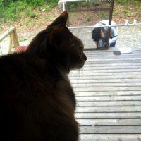 工作室に猫のドアを設置