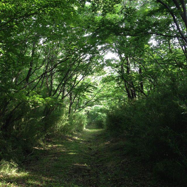 樹々のトンネル
