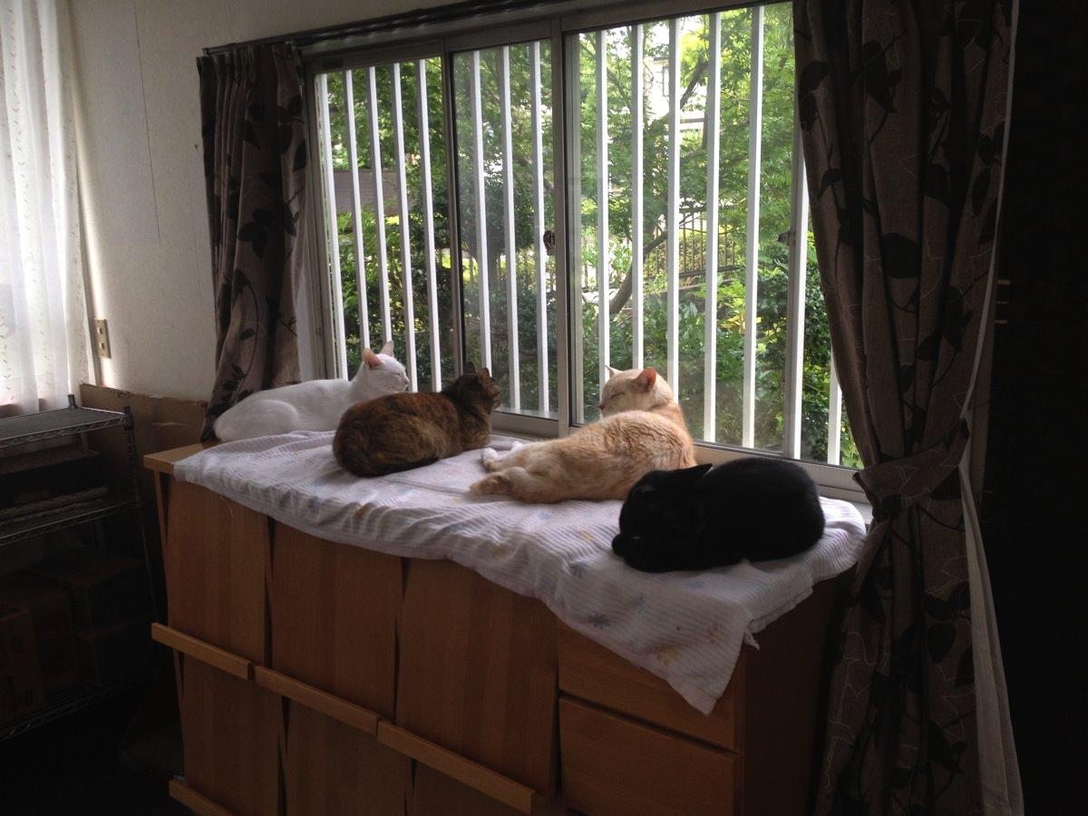 動物病院と猫シェルタ