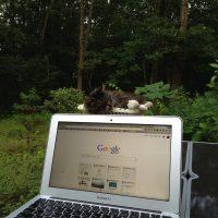 庭で仕事 with 猫