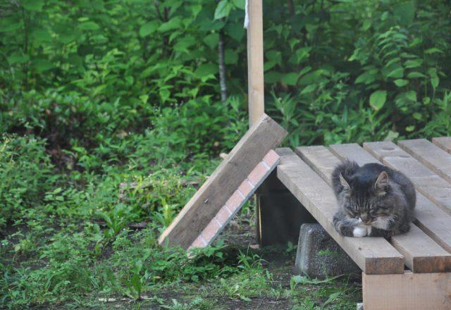 庭の猫の暮らし