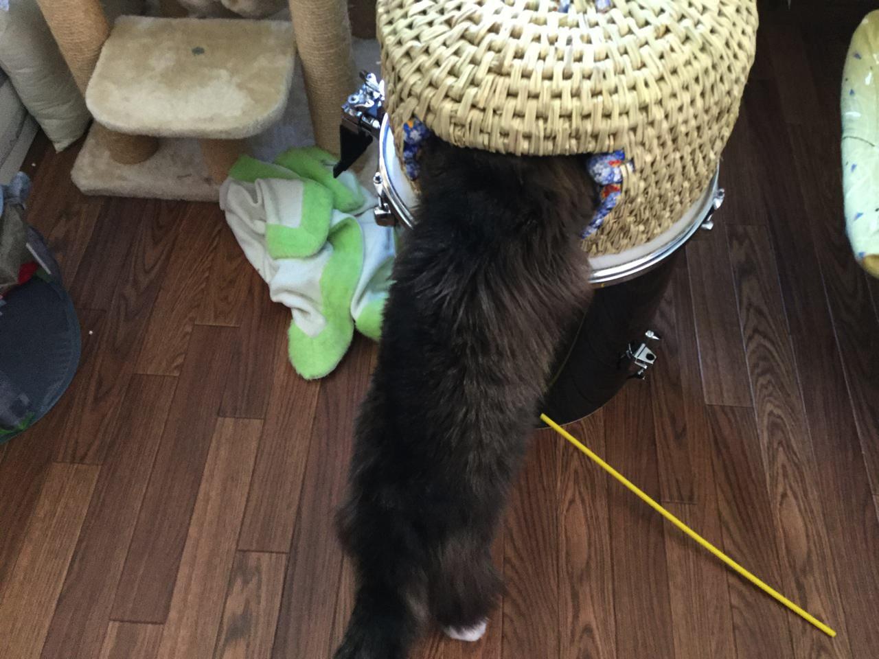 猫ちぐらづくり(完成から3日後)