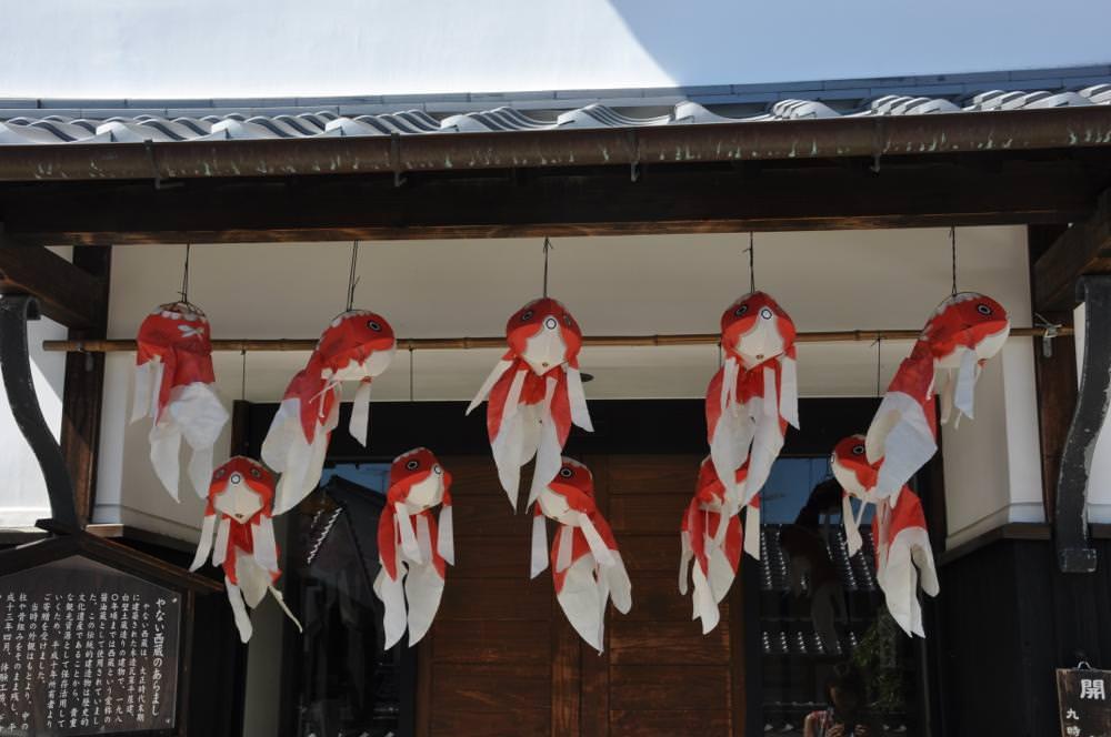 柳井市の金魚