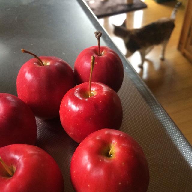 りんごあめ