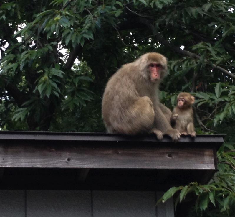猿の家族 2016