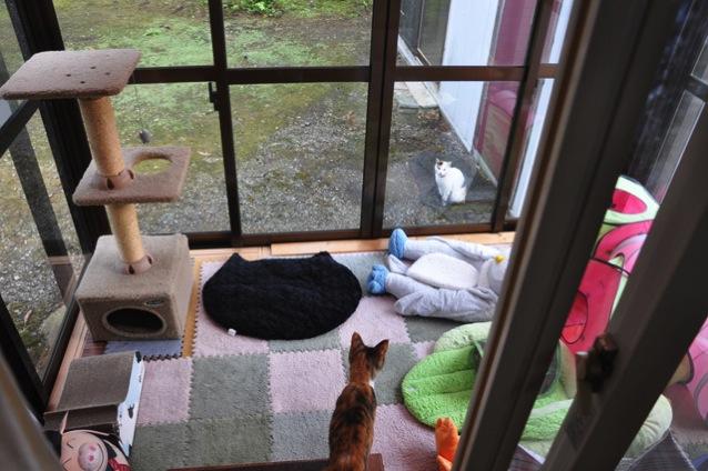 庭に来た猫