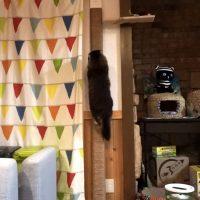 手作りキャットタワーで遊ぶ猫たち