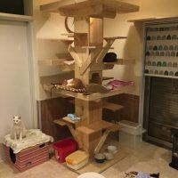 蓮田市の保護猫カフェ