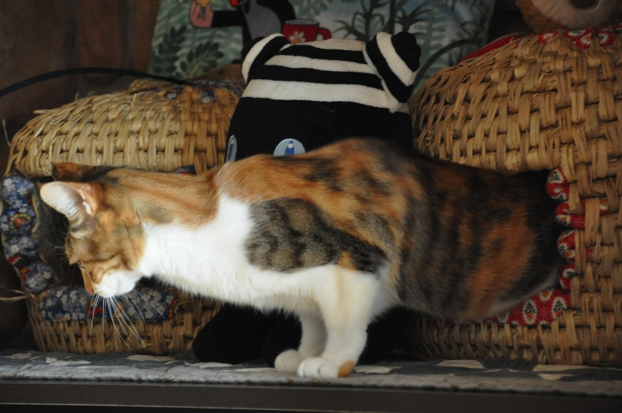 猫ちぐらから出てくる猫
