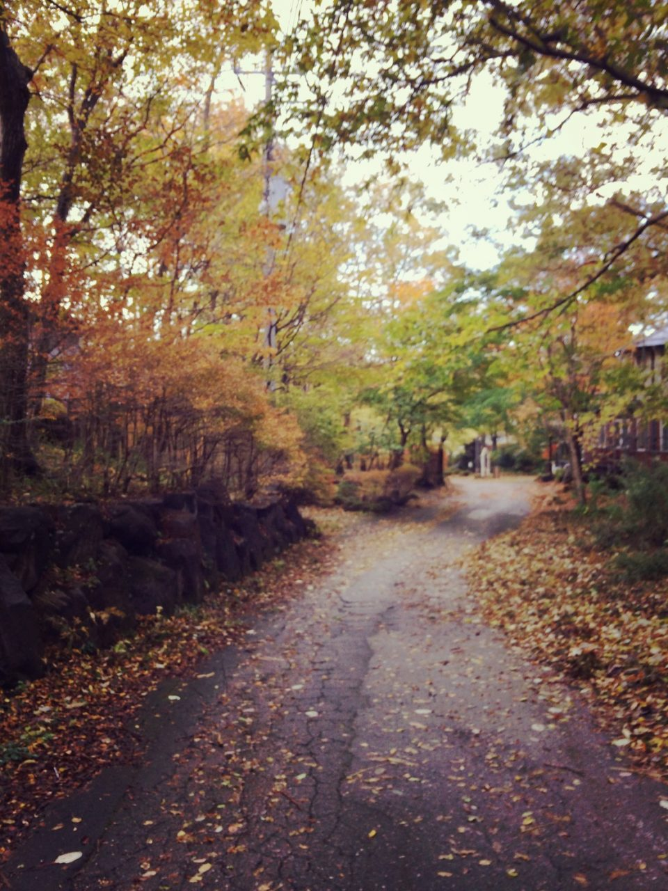 落葉の音と動物の足音