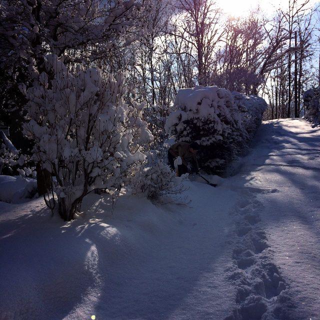 積雪とニホンカモシカ