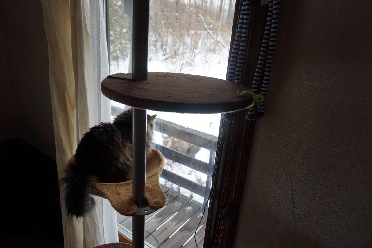 ニホンカモシカを観察する猫