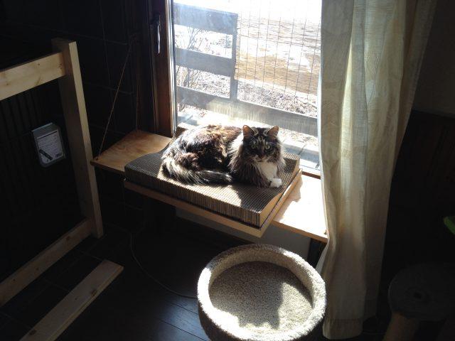 猫の日光浴用ハンモック