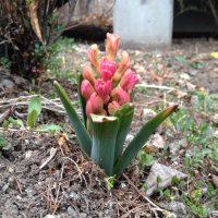 立春から二ヶ月