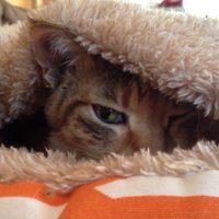 手作りベッドでうとうとする猫