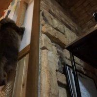 キャットタワーから降りる猫