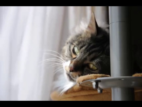 風を楽しむ猫