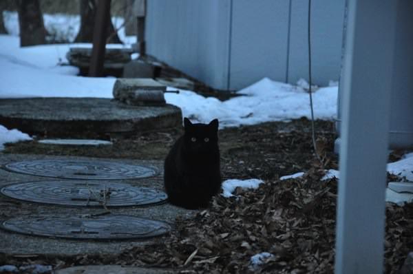 黒猫とゴミ