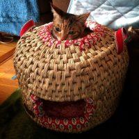 猫ちぐら(完成から28日後)