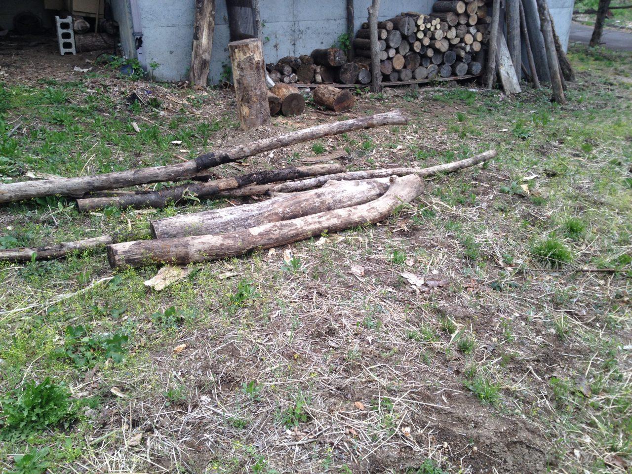 引き続き枯れ木の処理
