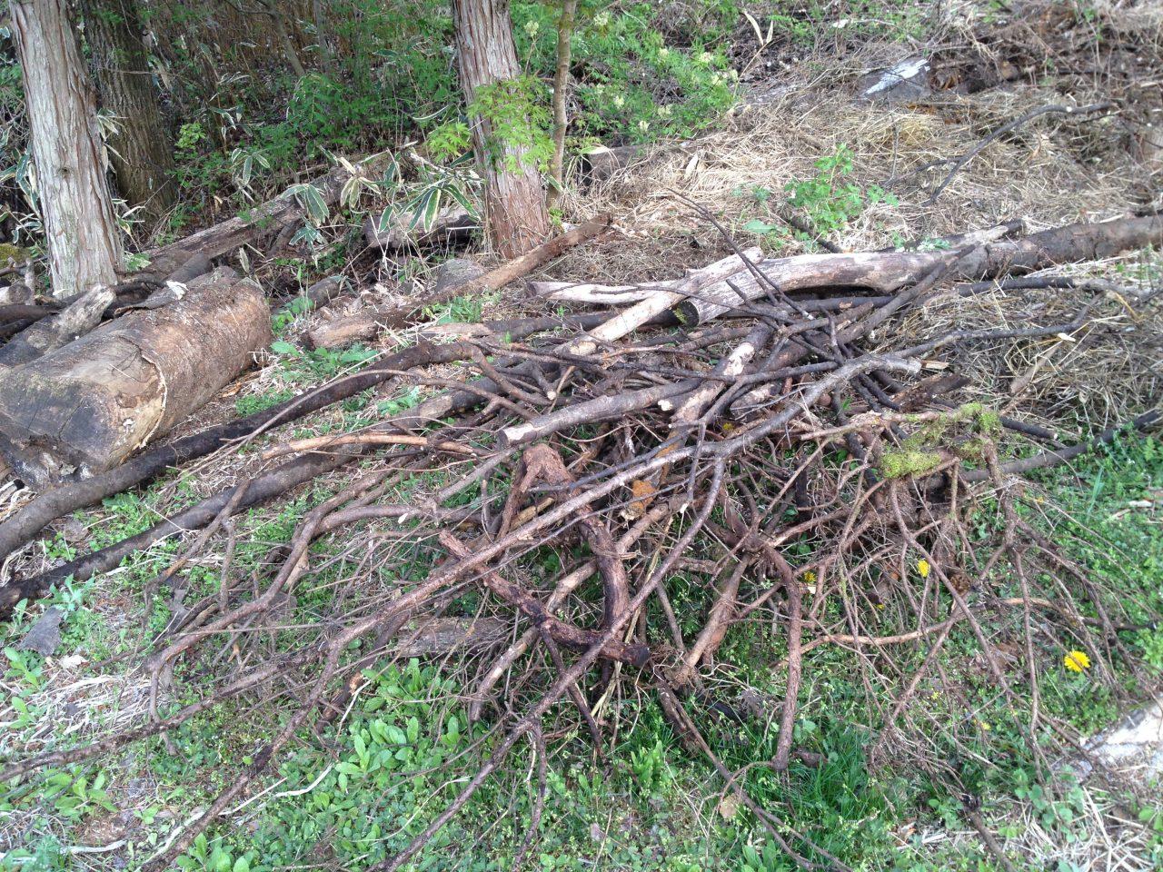 枯れ木を集める日々