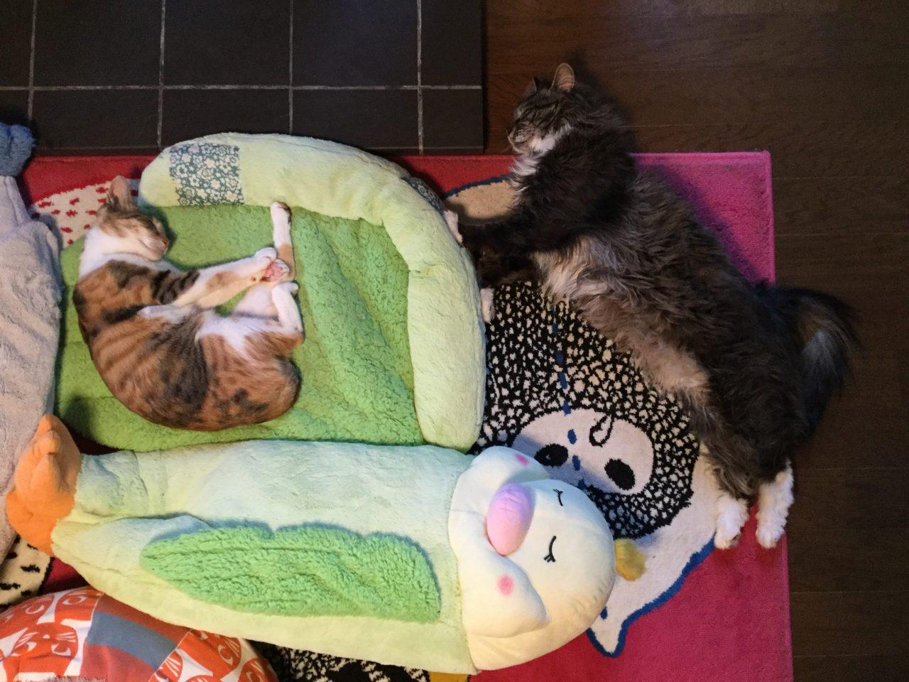 薪ストーブと猫の寝相