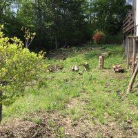 庭掃除の進捗状況