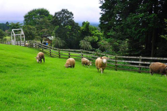 まかいの牧場と富士急ハイランド