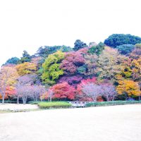 21世紀の森と広場