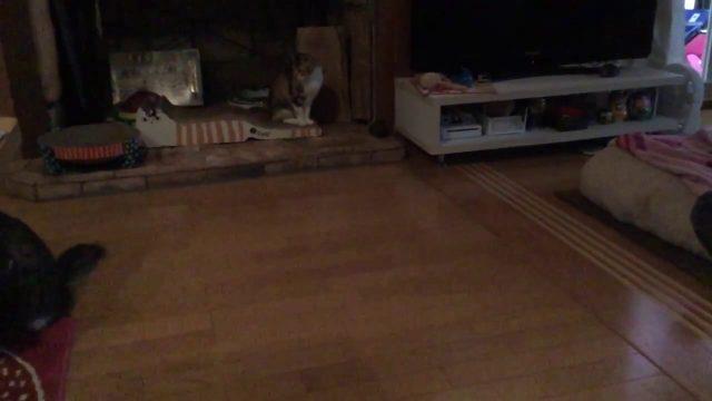 ナノファルコンと猫