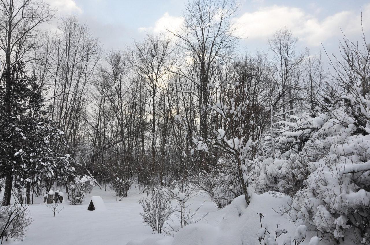 雪の中の捜索