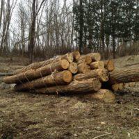 薪の原木を購入