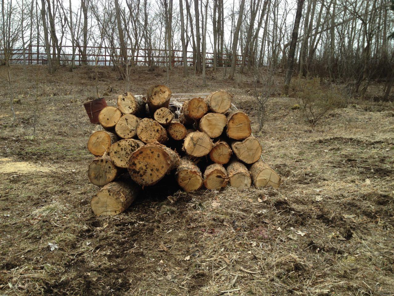 薪の原木を搬入