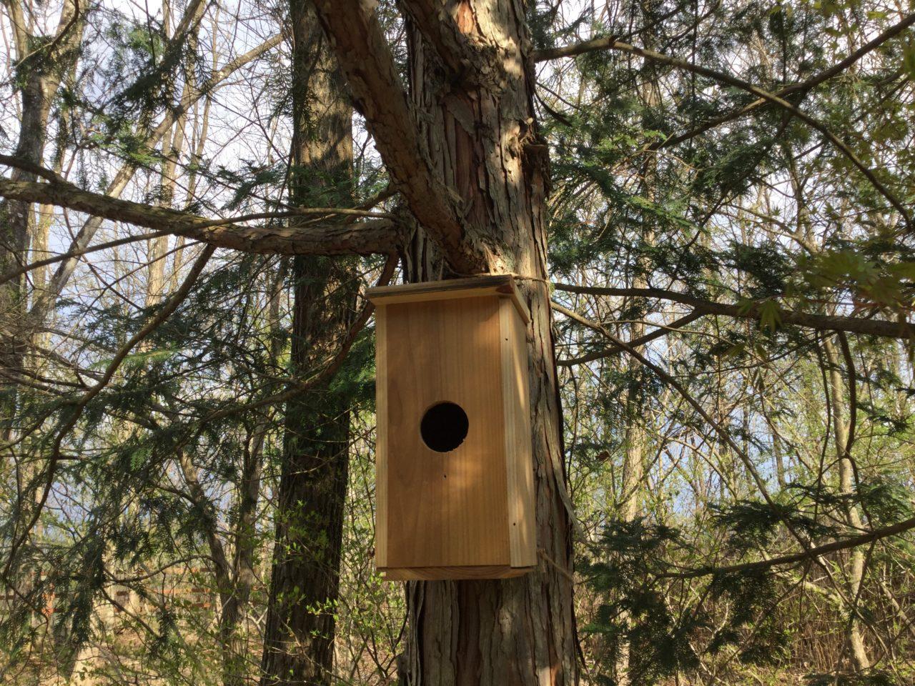 巣箱の設置