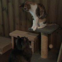猫の殴り合い
