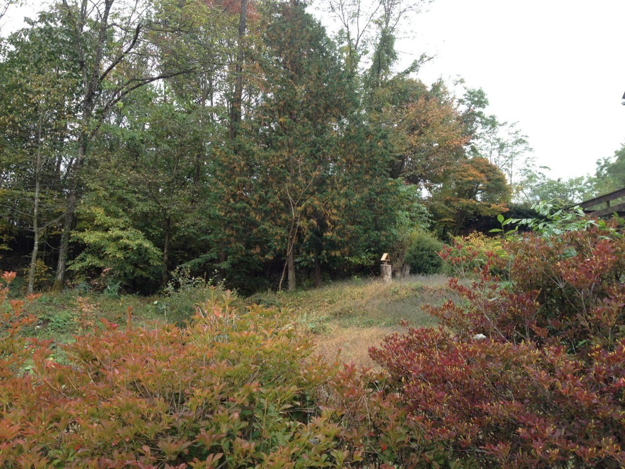 庭の紅葉進捗率とニホンカモシカ