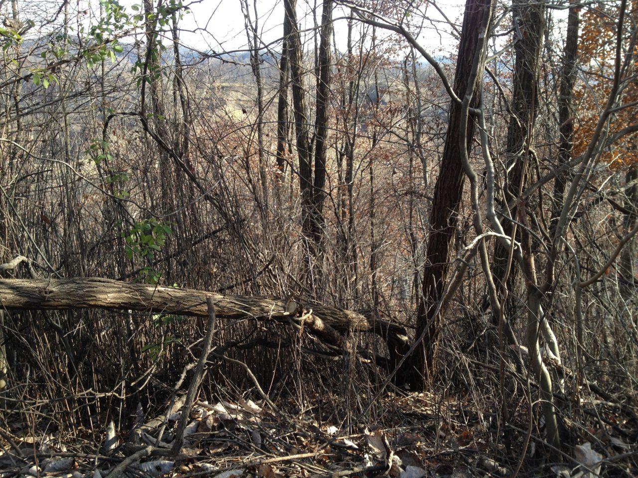 倒れかかっている木の切断