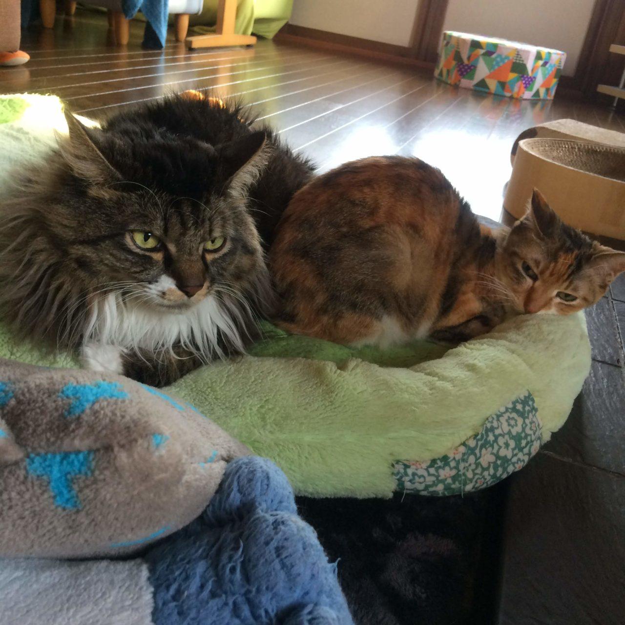 薪ストーブと猫