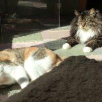 日向でくつろぐ二匹の猫