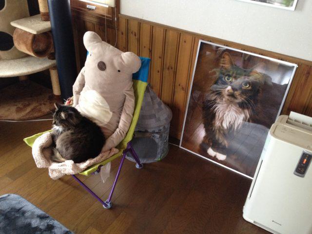 ぬいぐるみの膝に乗る猫