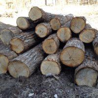 原木の購入